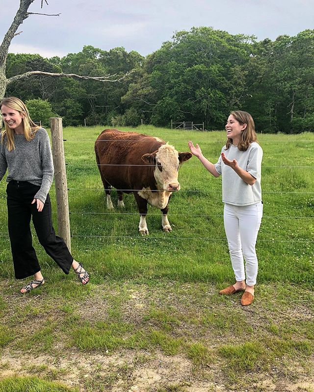 Not pictured: @jennygarrigues blocking traffic to capture @lindsayeisenman and me rubbing shoulders with the locals 🐄. #onthevineyard