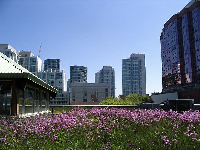 Mountain Equipment Co-op green roof in Toronto. Photo: Skeezix1000 CC 2.0
