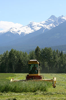 Upper Fraser Ranch, Haying season