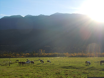 Grazing horses on Upper Fraser Ranch