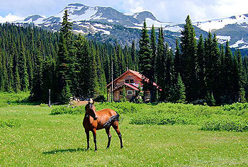 Horse hiking in the high country