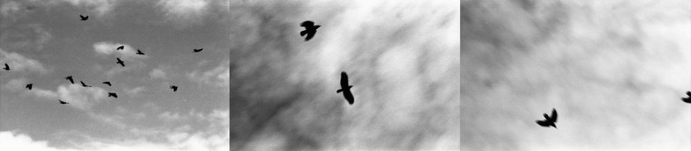 birdTrip.jpg