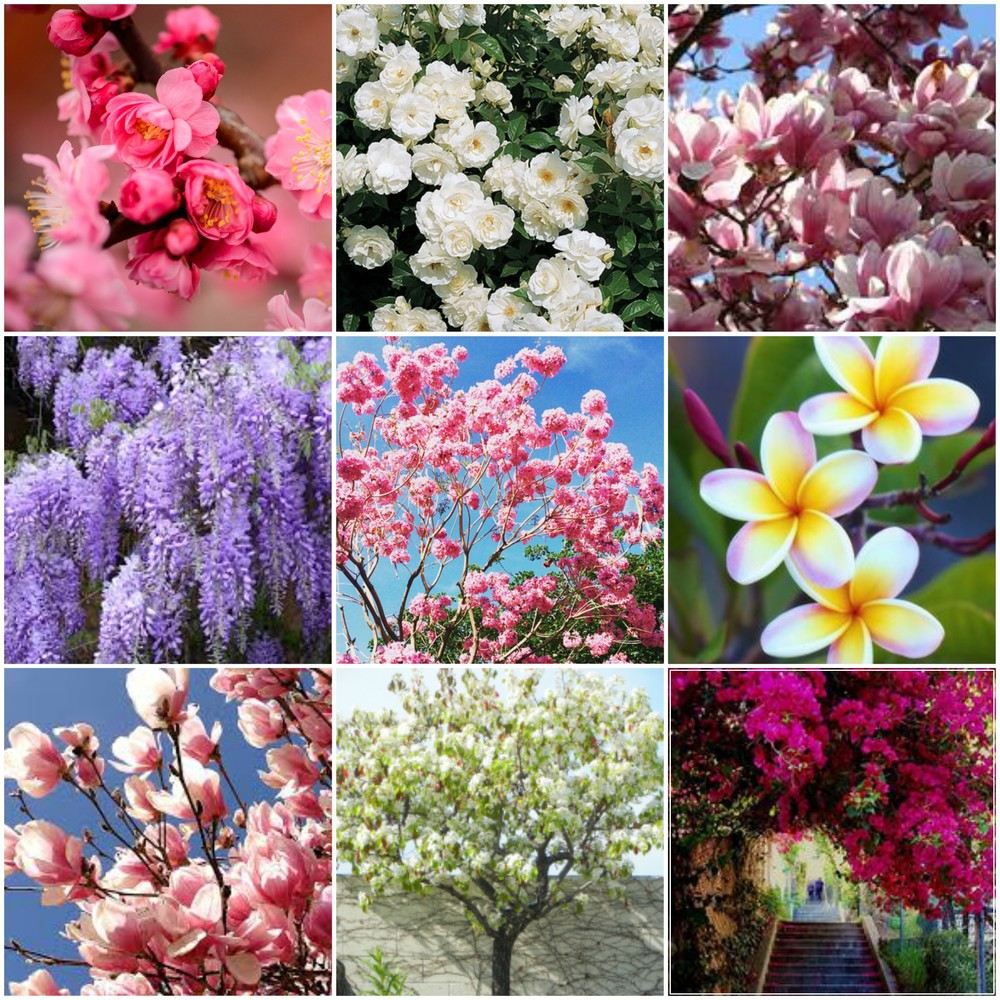 All flowers we can find just walking down any street in LA! Lucky us! The rare sight of cherry and plum blossoms has us all like.....