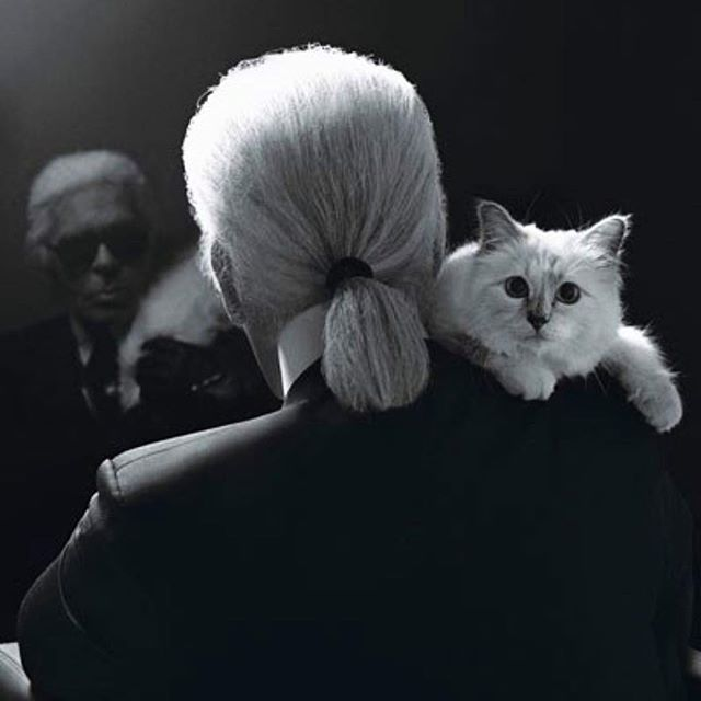 💔 Thank you Karl.  #choupette