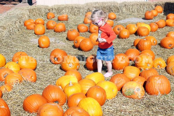 pumpkins14