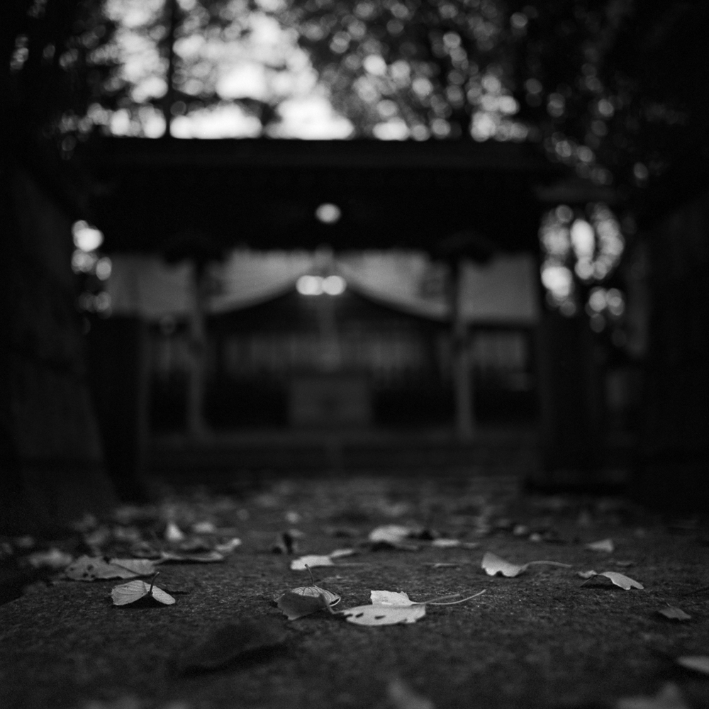 leaves at the shrine
