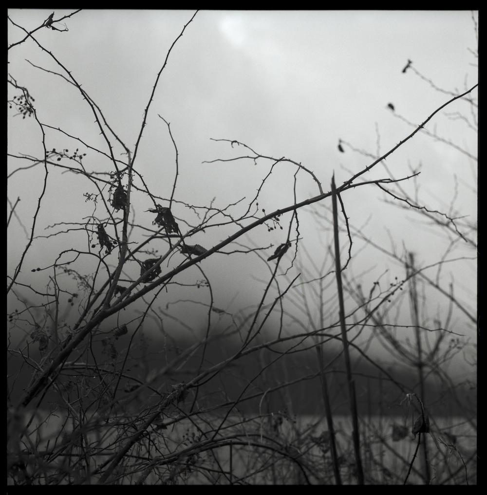 lake-and-weeds.jpg