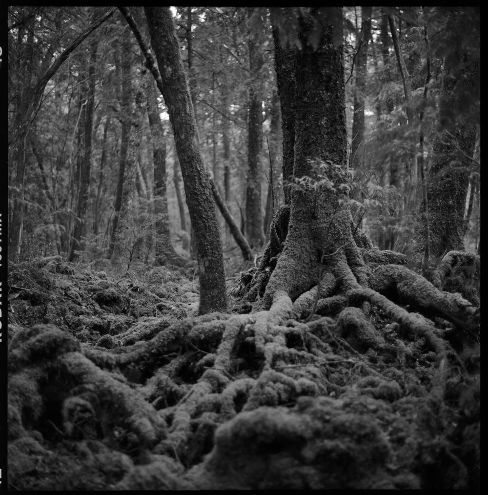 forest-bw-2.jpg
