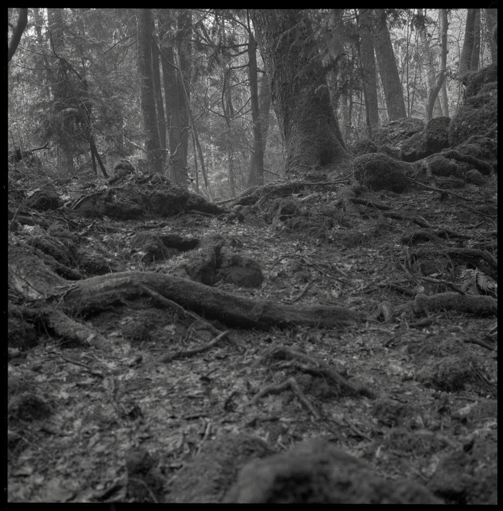 forest-bw-14.jpg