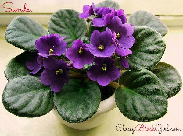 african violet classyblackgirl.com best man holiday delta sigma theta coleman love omega psi phi