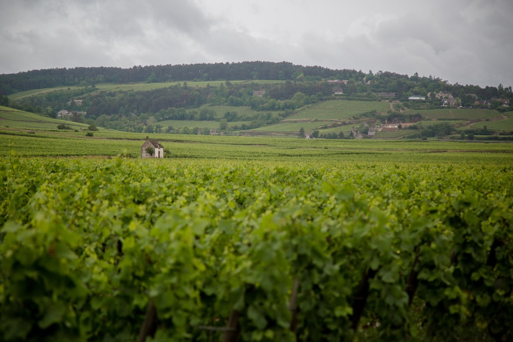 VOXblog-beaune-vineyards