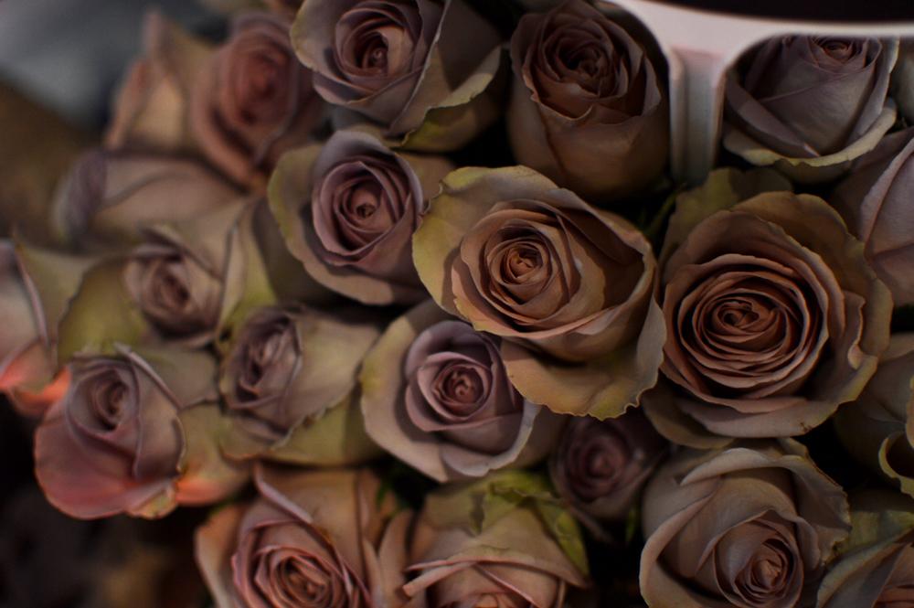 Image | la Fleur d'Harlem