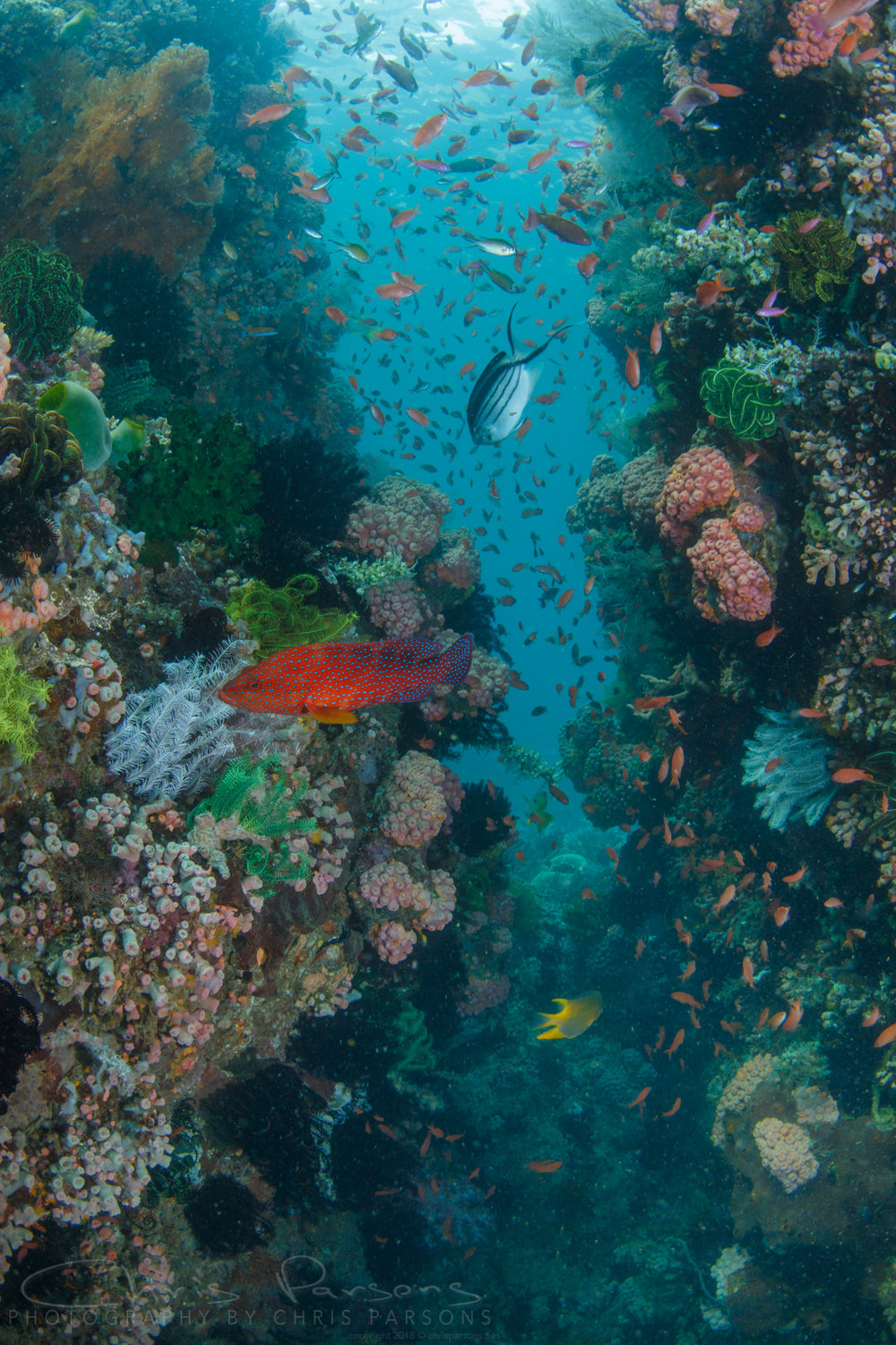 At the dive site called Twin Rocks, it is tough to decide whether to shoot wide or macro. With some lens setups, like the Nauticam wet wide lenses, you don't have to choose.