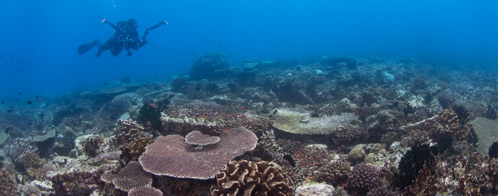 Not just macro; Anilao features some beautiful coral reefs.