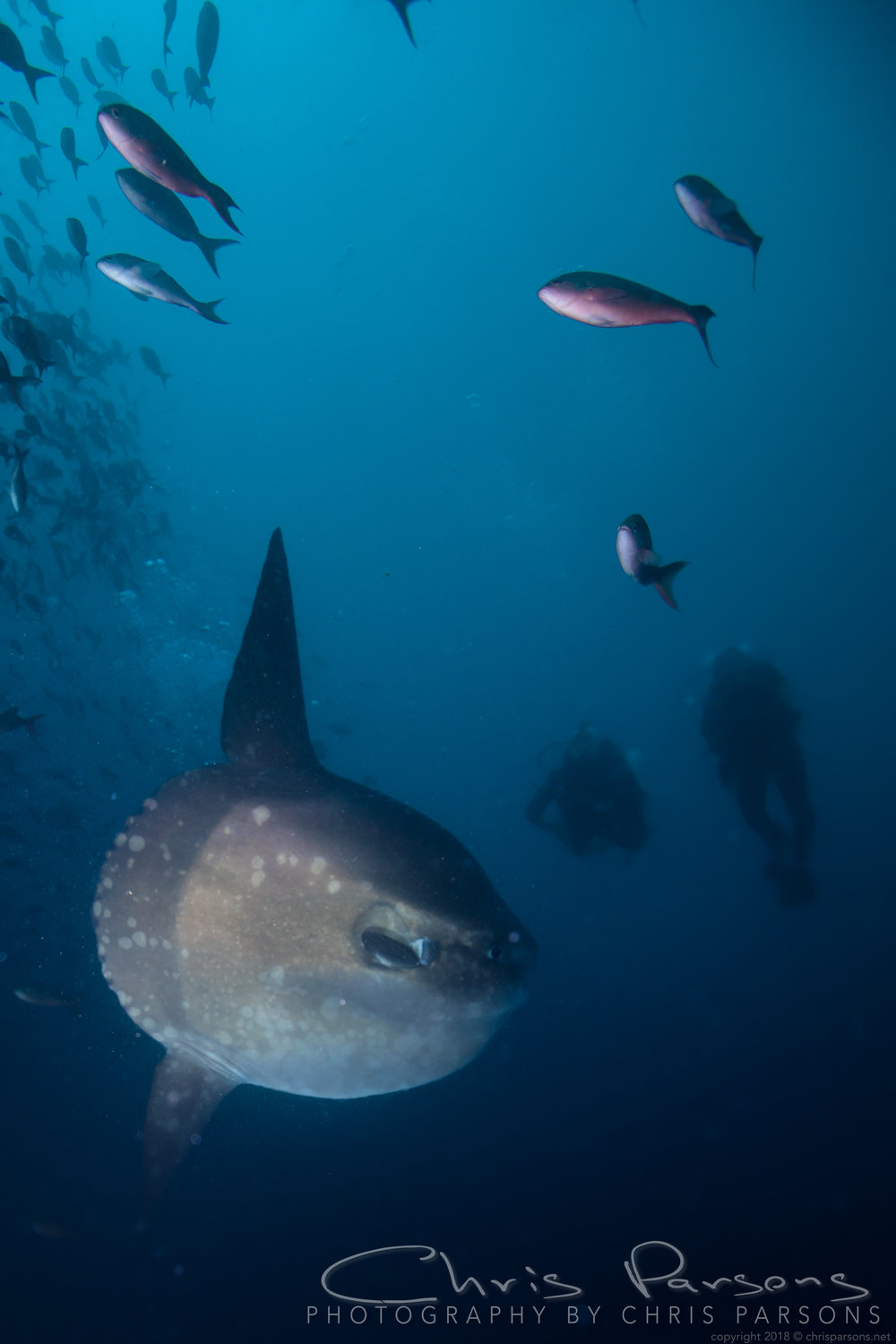 And finally, the Mola Mola….