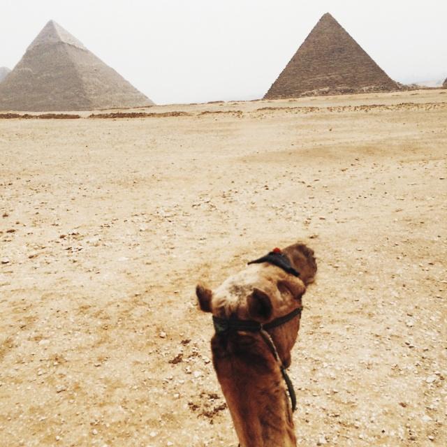 budget travel blog camel