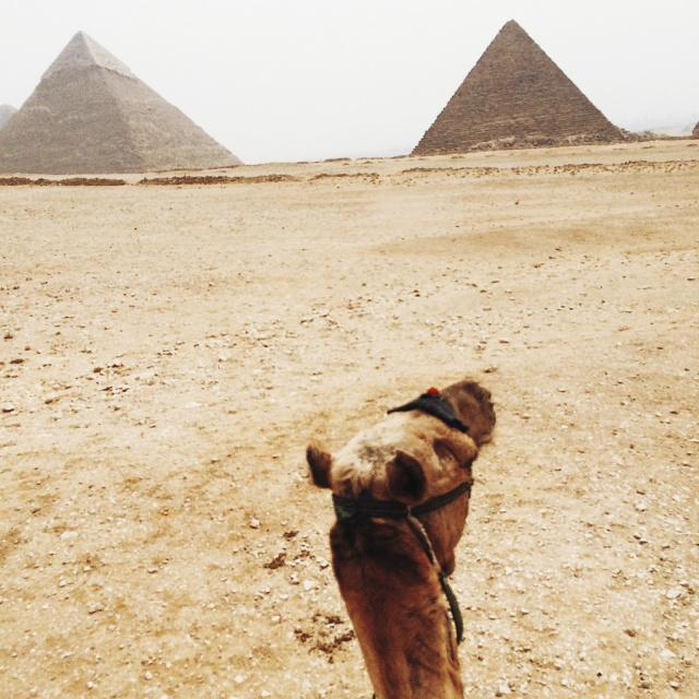 travel guide to egypt camels and pyramids