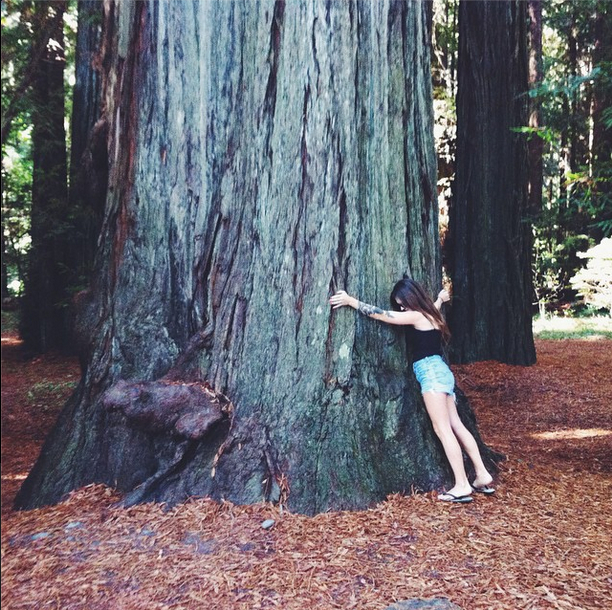 redwood travel guide to california road trip budget guidebook