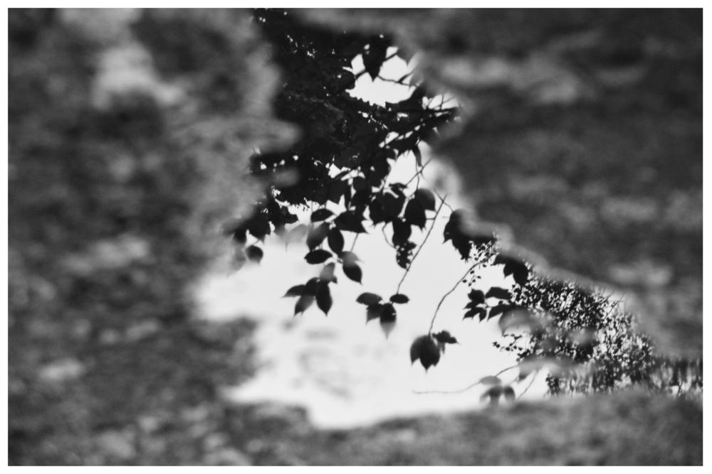 reflections7.jpg