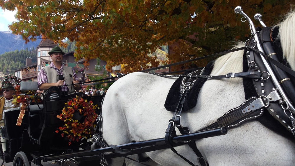 Our horse Magnus giving carriage rides through town.