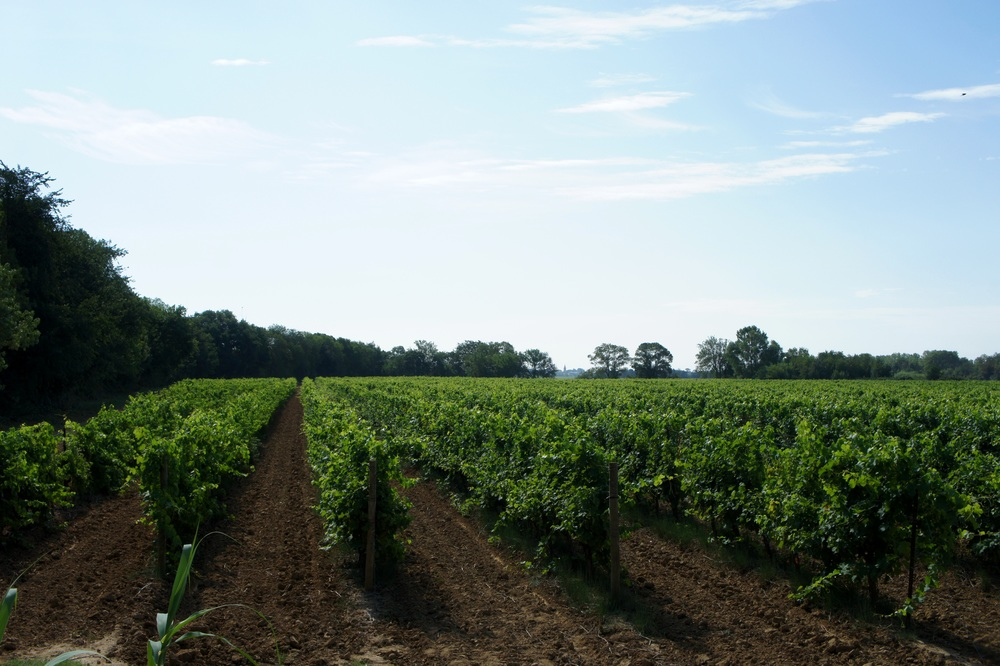 The fields of Domaine de Montmarin