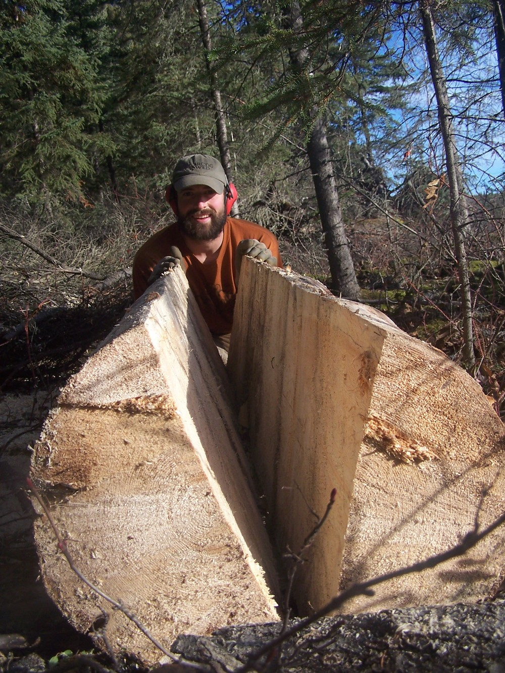 David split this large spruce with a small chainsaw.