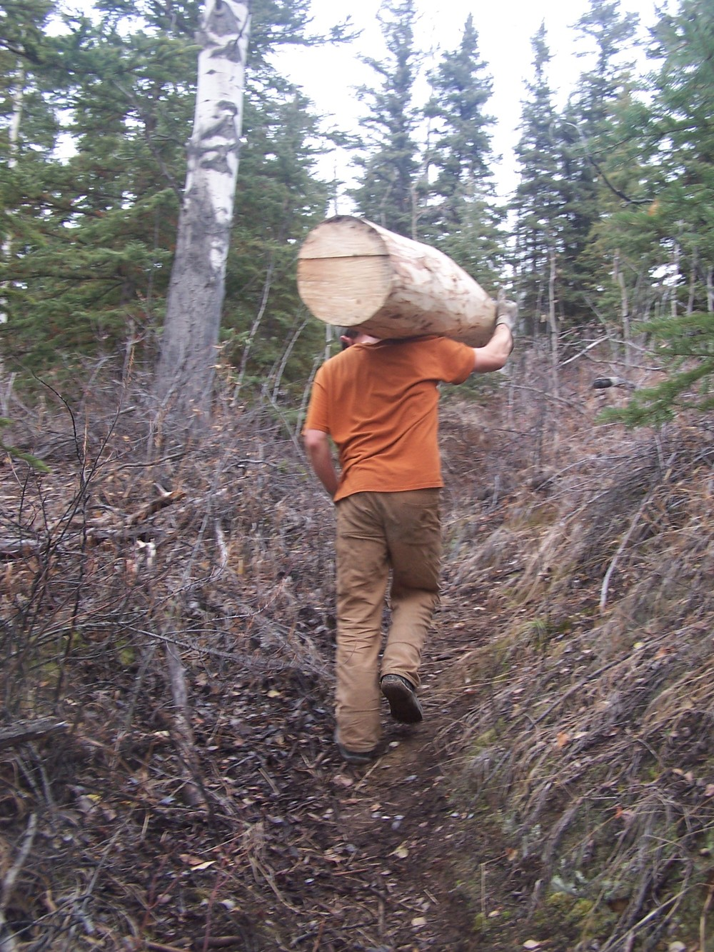 Hauling logs up the hill method 1- muscle powered.