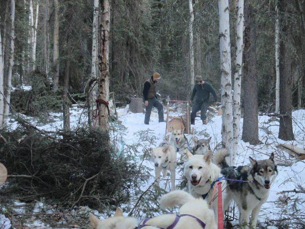 dog hauling