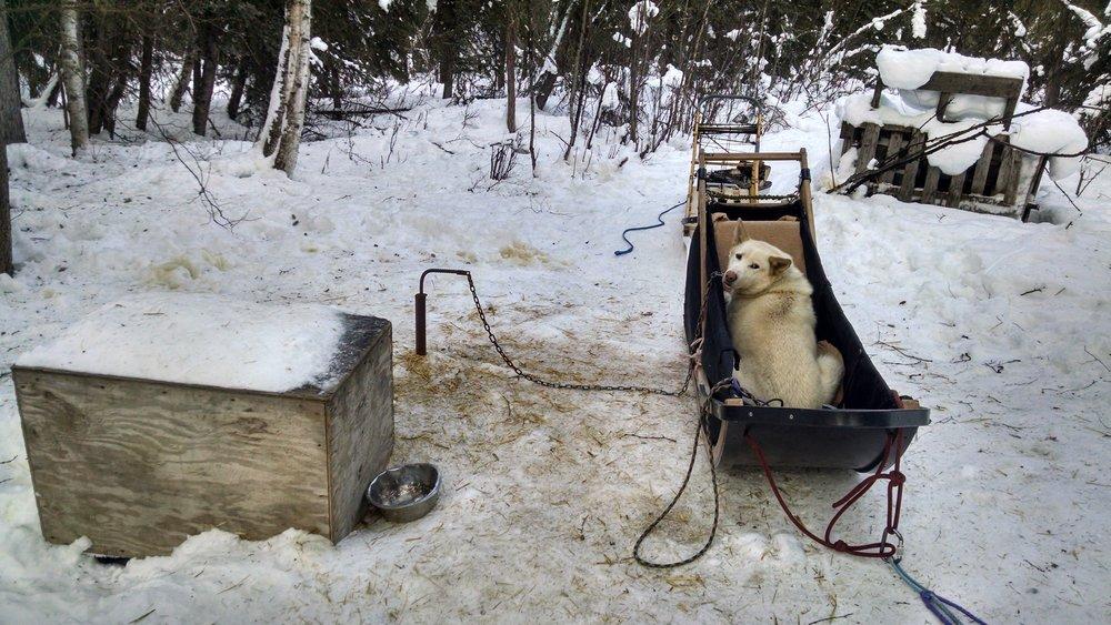 skookum in sled