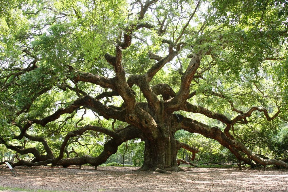 Angel_Oak_15.jpg