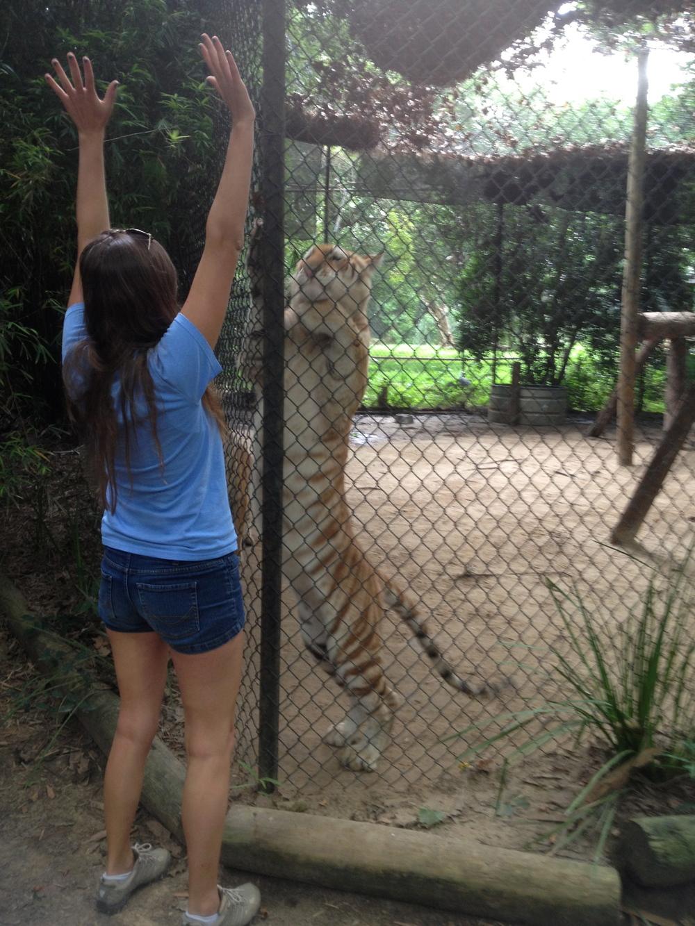 Carly Tiger Jump.jpg