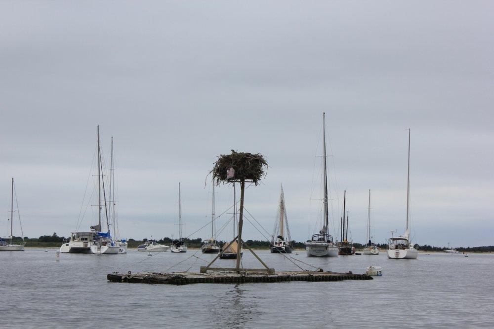 Floating Birds Nest !
