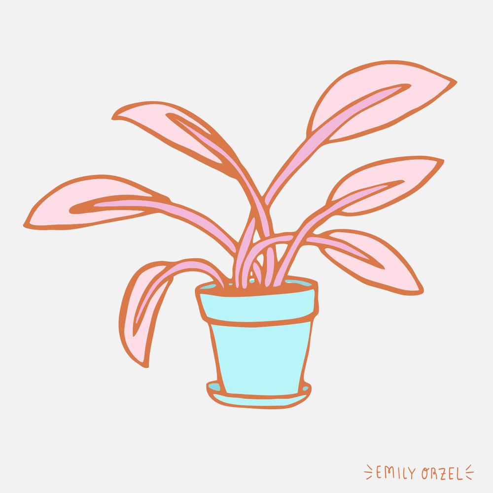 pinkplant2.jpg