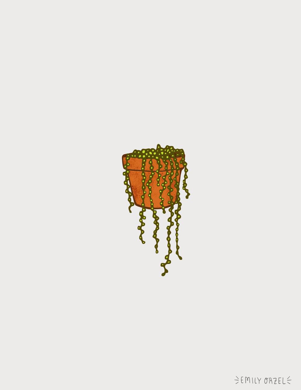 pearlplant.jpg