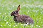 rabbit-214540_150.jpg