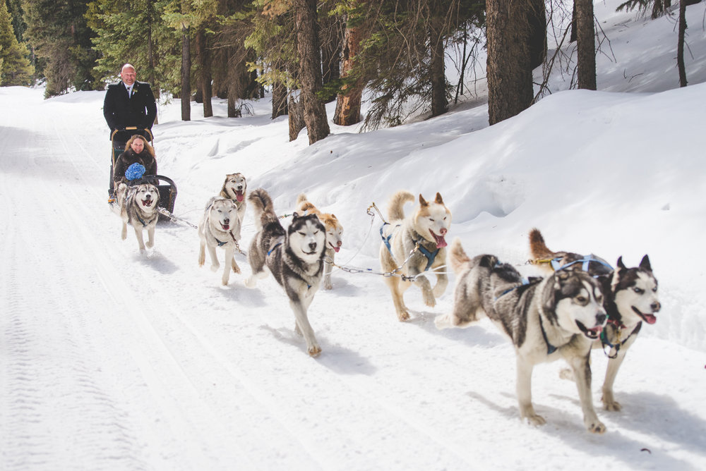 winter adventure elopement with good times in breckenridge - a dog sledding wedding