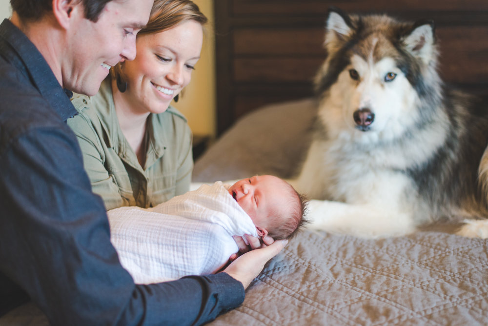 even the dog gets to be in the family photos with this couple's newborn girl!