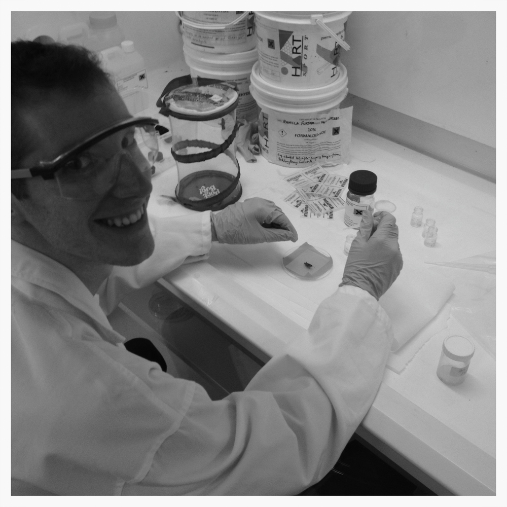 Scott preparing grasshoppers for transmission electron microscopy