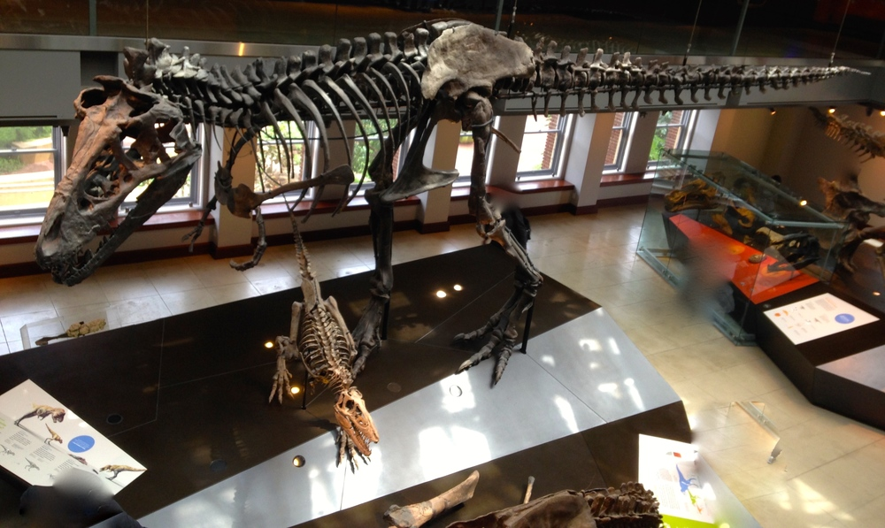 "The 17-year old specimen, nicknamed ""Thomas"" towers over the 2-year old–photographed from the upper level."