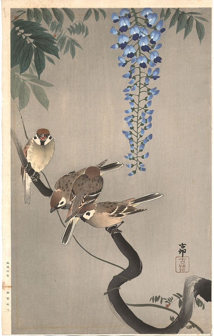 printsandthings: Koson - Sparrows on wisteria, ca 1930
