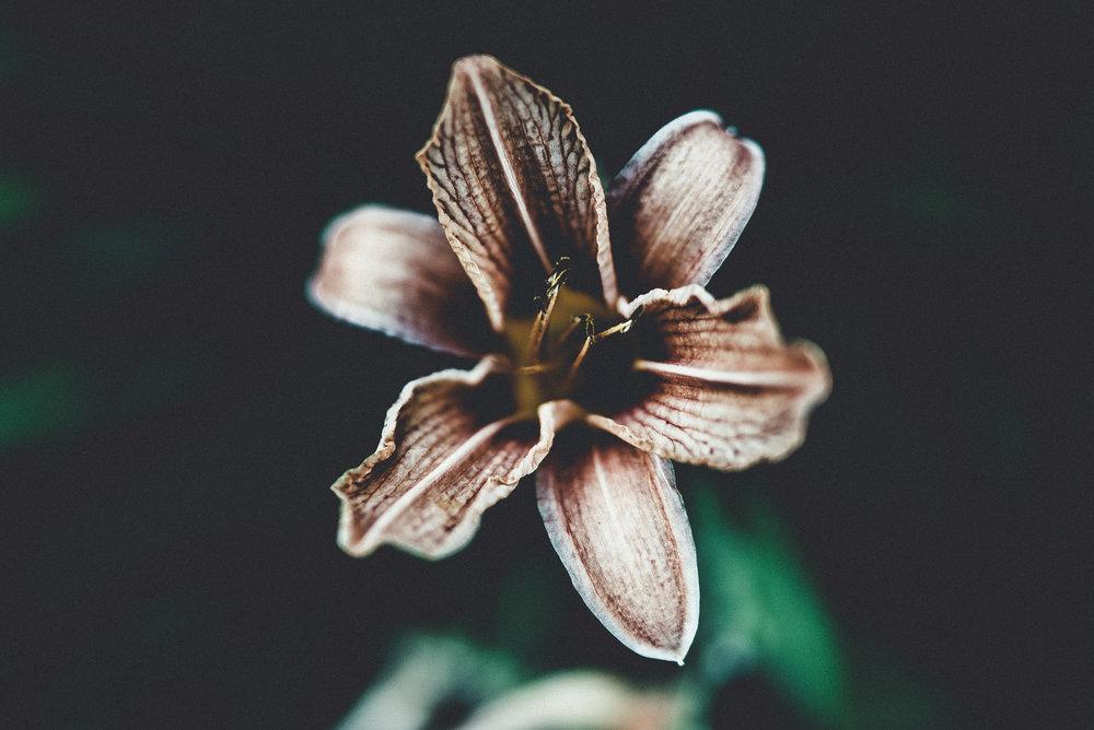 flowers 35 (9 of 9).jpg