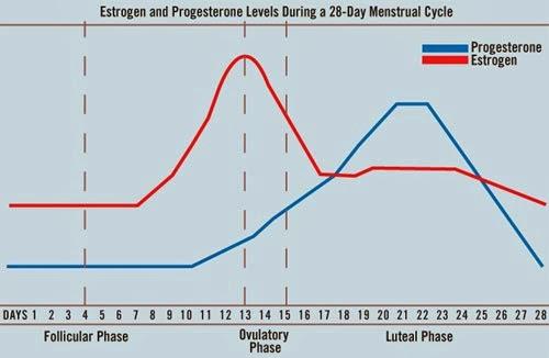 Hormone-cycle.jpg
