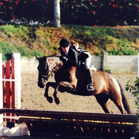 Hunter/Jumper