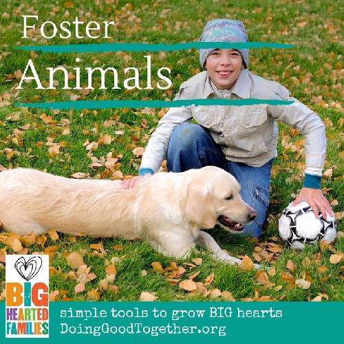 Foster animals