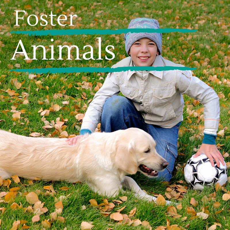 Foster Animals