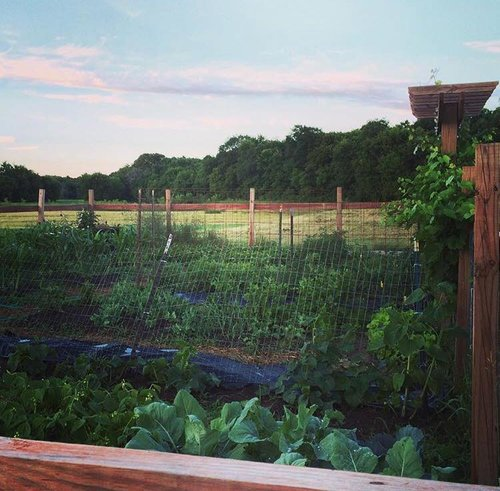 Little Green Thumbs: A Guide to Doing Good with the Family Garden ...