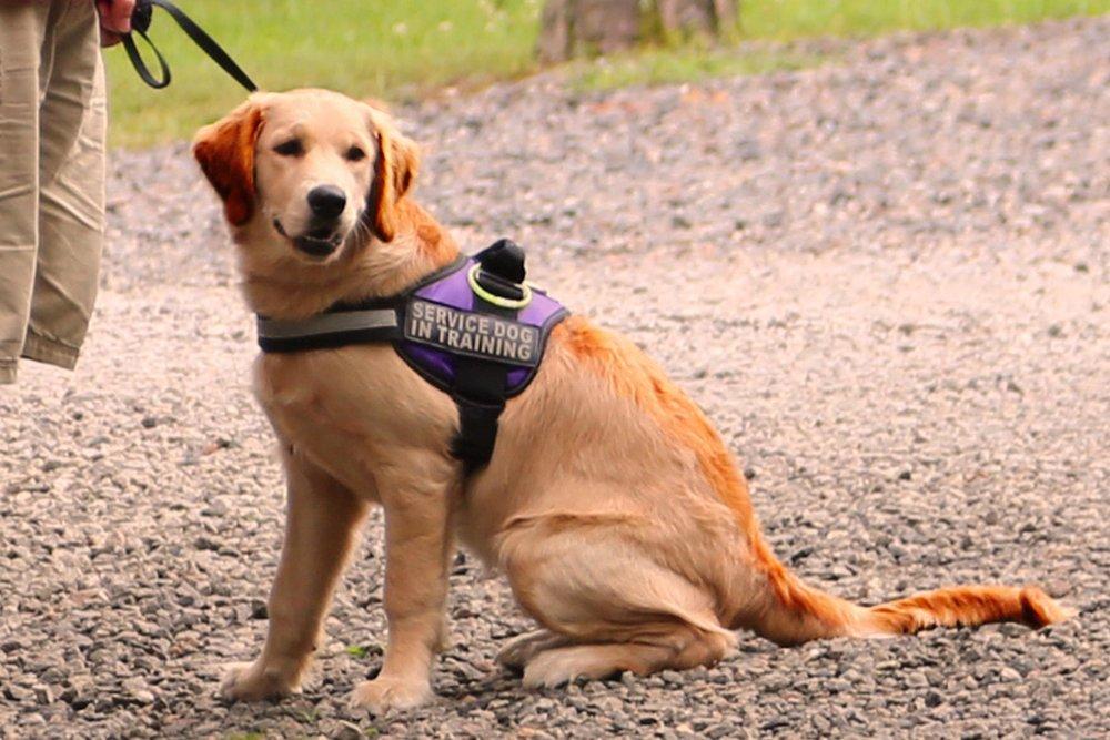servicedog.jpg