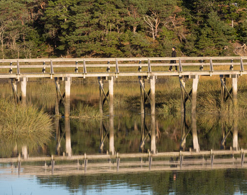 - There are lots of trails and bridges over coastal water and marshes.