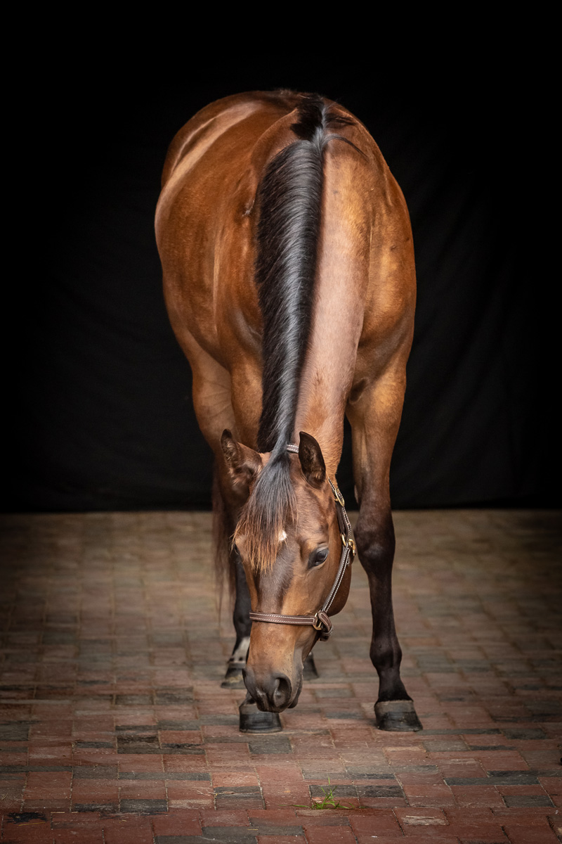 horse-and-rider-31w.jpg