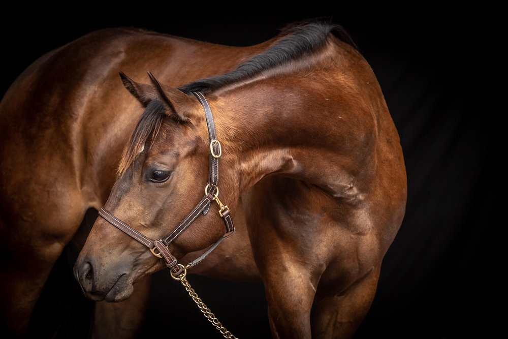 horse-and-rider-24w.jpg